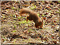 SD2708 : Red Squirrel Reserve, Formby by David Dixon