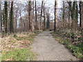 SE3215 : Footpath through Holmes Plantation - Heeley Road by Betty Longbottom