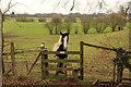 SK8171 : Inquisitive pony by Richard Croft