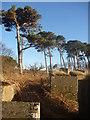 NT6378 : East Lothian Landscape : Low Sun At Hedderwick Hill by Richard West