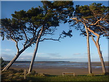 NT6378 : Coastal East Lothian : A Bench With A View by Richard West