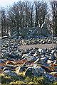 NJ7428 : Loanhead of Daviot Recumbent Stone Circle (16) by Anne Burgess