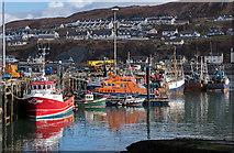 NM6797 : Mallaig harbour by The Carlisle Kid