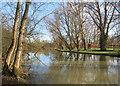 SP5107 : River Cherwell by Des Blenkinsopp