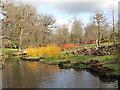 SU9770 : Dogwood stems bright coloured in winter, Savill Garden by David Hawgood