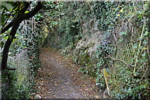 SX5052 : South West Coast Path by N Chadwick