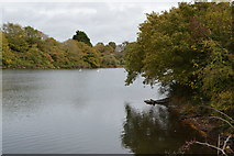 SX5052 : Radford Lake by N Chadwick