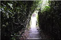 SX5053 : South West Coast Path by N Chadwick