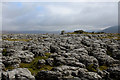 SD7177 : Limestone Pavement on Scales Moor by Chris Heaton