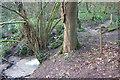 ST7661 : Horsecombe Brook by Derek Harper
