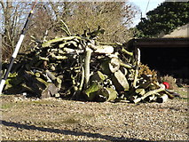 TM1083 : Wood Pile at Shelfanger Hall by Adrian Cable
