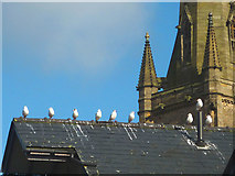 SD4861 : Rooftop gulls, Lancaster by Karl and Ali