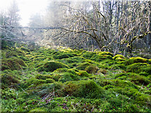 NH5853 : A channel of bog in Monadh Mòr bog forest by Julian Paren