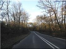 TQ0241 : Horsham Road, Grafham by David Howard