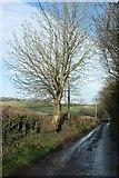 ST6961 : Mill Lane, Priston by Derek Harper