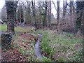 ST6992 : A woodland stream by Anthony Vosper