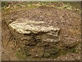 SE2132 : Rock outcrop in Black Carr Wood by Stephen Craven