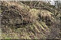 NT1288 : Rock Outcrop, Townhill Railway by Robert Struthers