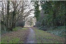 TQ5839 : Tunbridge Wells Common by N Chadwick