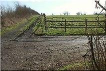 ST6660 : Field near Castle Farm by Derek Harper