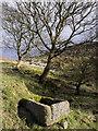 SK2574 : Trough and trees near Curbar Gap by Trevor Littlewood