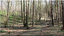 TG1608 : Path traversing GreenAcres by Evelyn Simak