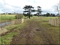 SO8844 : tree planting in Croome Park by Philip Halling