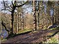 SK2479 : Path through woods on east side of River Derwent by Trevor Littlewood