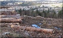 J3630 : Clear fell area in Donard Wood by Eric Jones