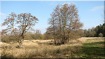 TG1608 : On the northern edge of Colney Wood by Evelyn Simak