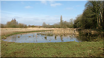 TG1608 : Pond beside the River Yare by Evelyn Simak