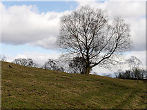 SD8203 : Tree on Grazing Field at Heaton Park by David Dixon