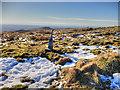 SD6513 : Winter Hill, Looking towards Rivington Pike by David Dixon