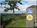SO4685 : Flounders Folly walk this way-Lower Dinchope, Shropshire by Martin Richard Phelan