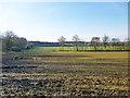 TL1443 : Fields, Shuttleworth Estate by Robin Webster