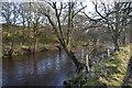 SE1863 : River Nidd by N Chadwick