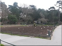 SZ0891 : Bournemouth: preparing to re-lay the grass by Chris Downer