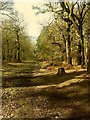 SJ9058 : Biddulph Country Park: Obelisk Walk, looking downhill by Stephen Craven