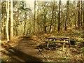SJ9059 : Biddulph Country Park: picnic bench by Stephen Craven