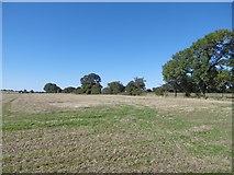 NZ2173 : Arable land, Dinnington by Richard Webb