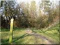 ST5959 : Either way around Burledge Hill by Neil Owen