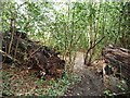 SE3502 : Public footpath through a fallen tree, Worsbrough by Christine Johnstone