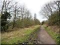 SE3403 : The Trans Pennine Trail alongside woodland by Christine Johnstone