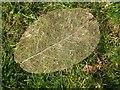 SX0863 : Leaf skeleton by Philip Halling