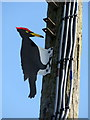 SN1846 : Woodpecker decoy in Aberystwyth Road, detail by ceridwen
