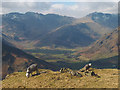 NY3106 : Herdwicks above Great Langdale by Karl and Ali