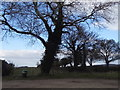 SP8001 : Trees by Shootacre Lane, Princes Risborough by David Howard