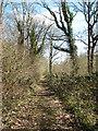 TG1500 : Footpath in Hethel Wood by Evelyn Simak