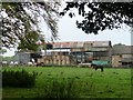 NZ1248 : Horses and barns at Little Greencroft by Robert Graham