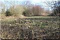 ST1998 : North east corner of Nant Philkins Fields, Oakdale by M J Roscoe